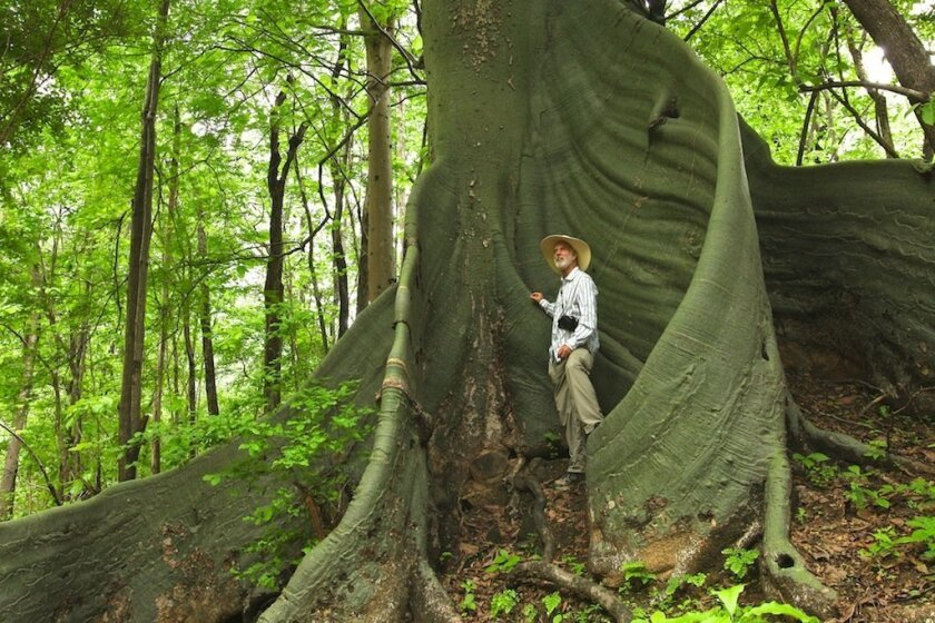 Ivan Gayler, founder of Nature and Culture International, pauses against the massive trunk of a ceiba tree near the border of Ecuador and Peru.