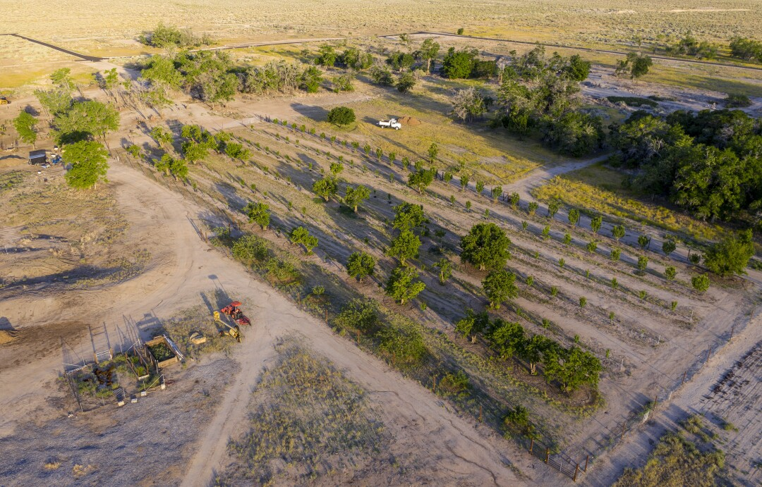 A drone view of the Manzanar National Historic Site fruit orchard.