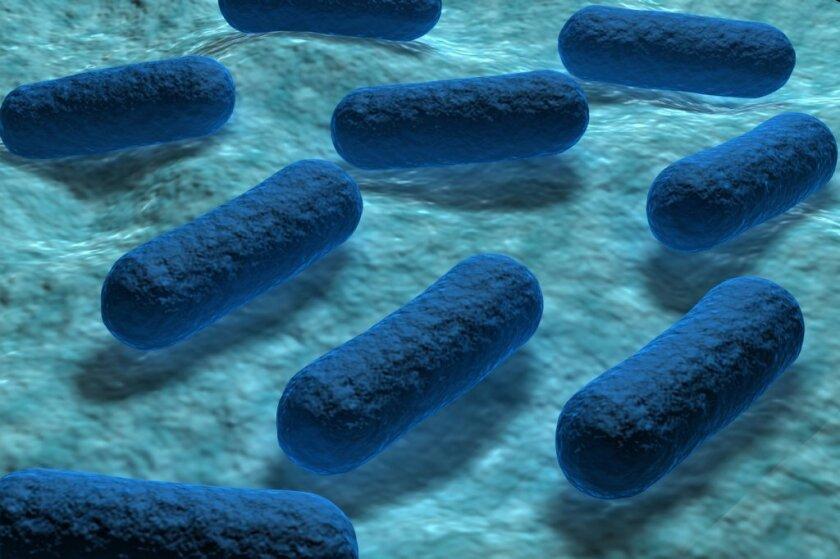 Según los Centros de Control y Prevención de Enfermedades (CDC), la bacteria puede propagarse en la carne que no ha sido cocida lo suficiente y puede también vivir en las ubres de las vacas e inclusive llegar a la leche que no está pasteurizada.