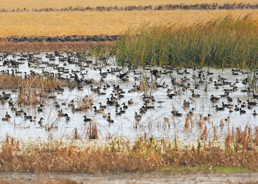 The disappearance of wetlands and contamination of waterways threaten North Dakota's heritage, says Howard Vincent, chief executive of Minnesota-based Pheasants Forever, a group supporting Measure 5.