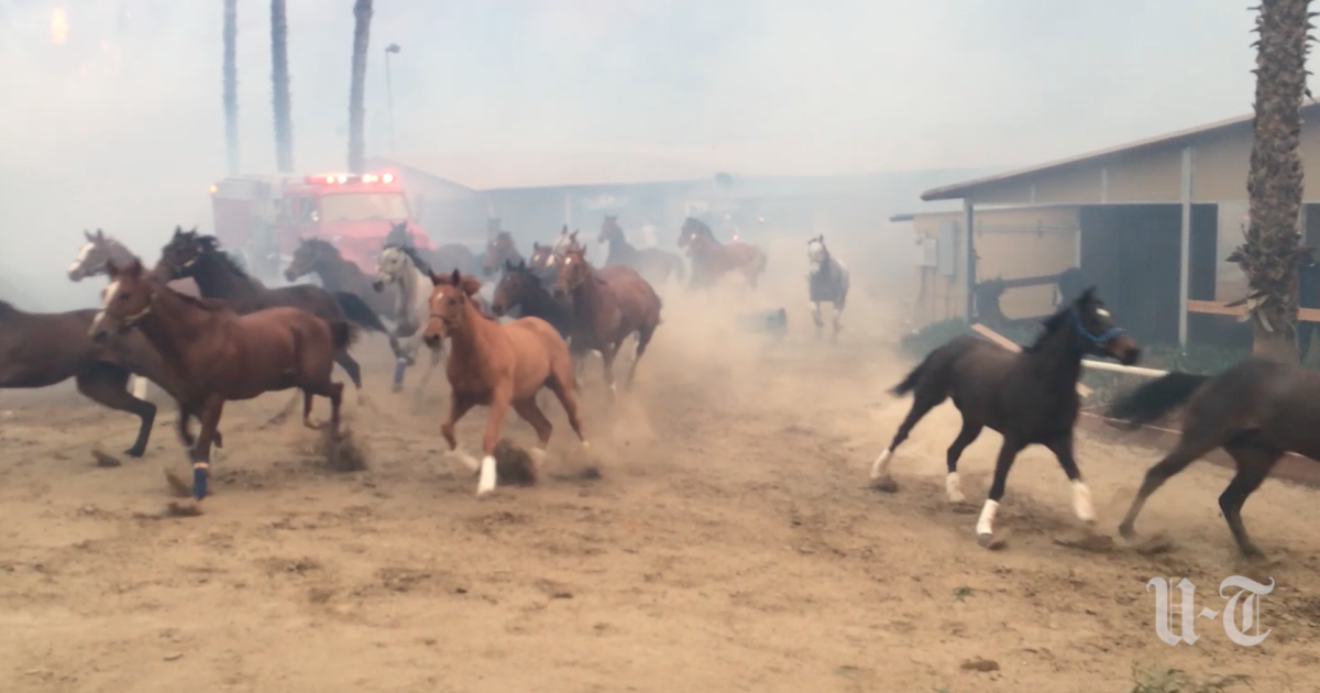 California fires: Sudden firestorm forces deadly stampede at
