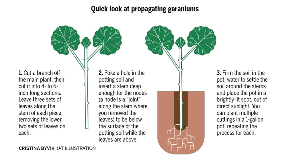 Plant propagation made easy