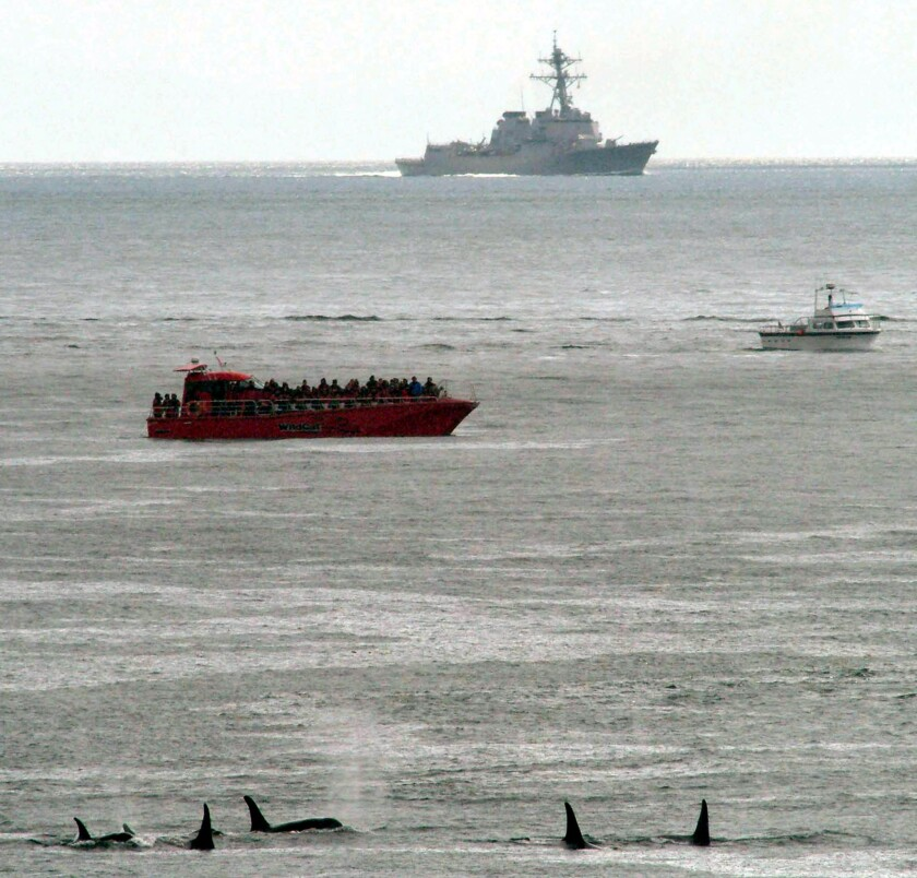 A pod of killer whales, bottom, swims near a whale-watching boat and a Navy ship near San Juan Island, Wash., in 2003.