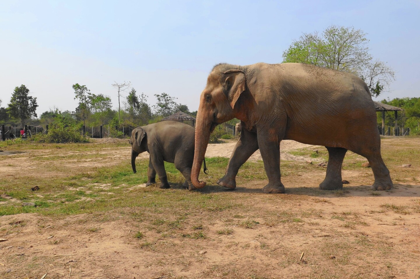 A baby elephant is one of the 17 elephants at the Wildlife Friends Foundation Thailand's refuge.