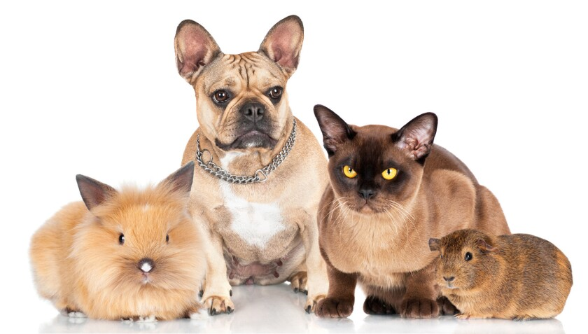 Emergency evacuation plans should include making provisions for family pets.