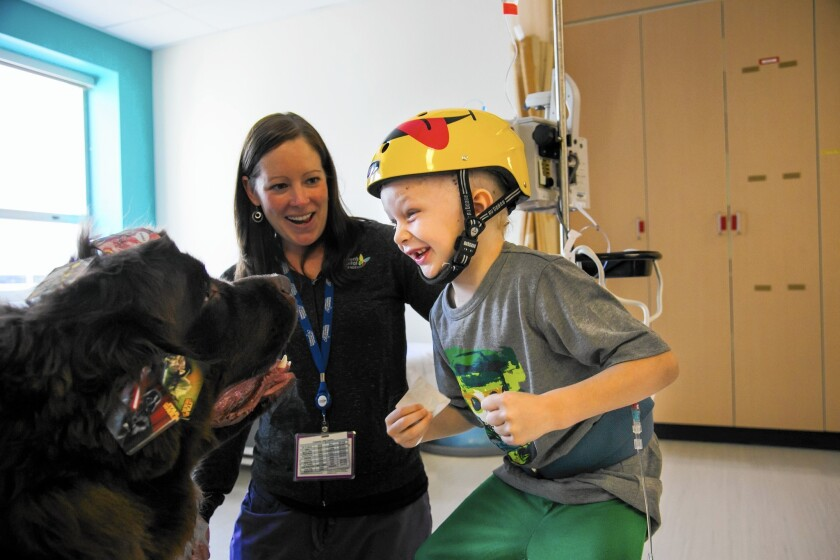 Gordon the therapy dog at Children's Hospital Los Angeles