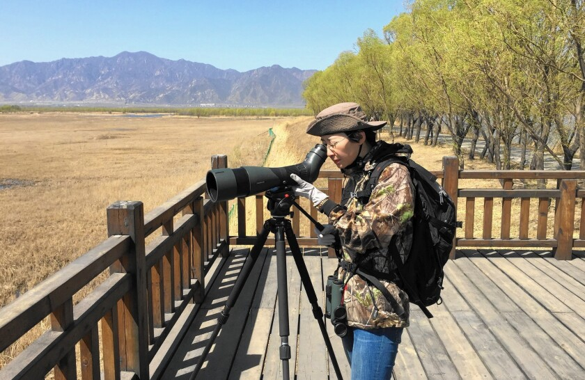Conservationist Li Qingxin, at the Yeyahu Nature Reserve in rural Beijing, goes birding three times a week on average.
