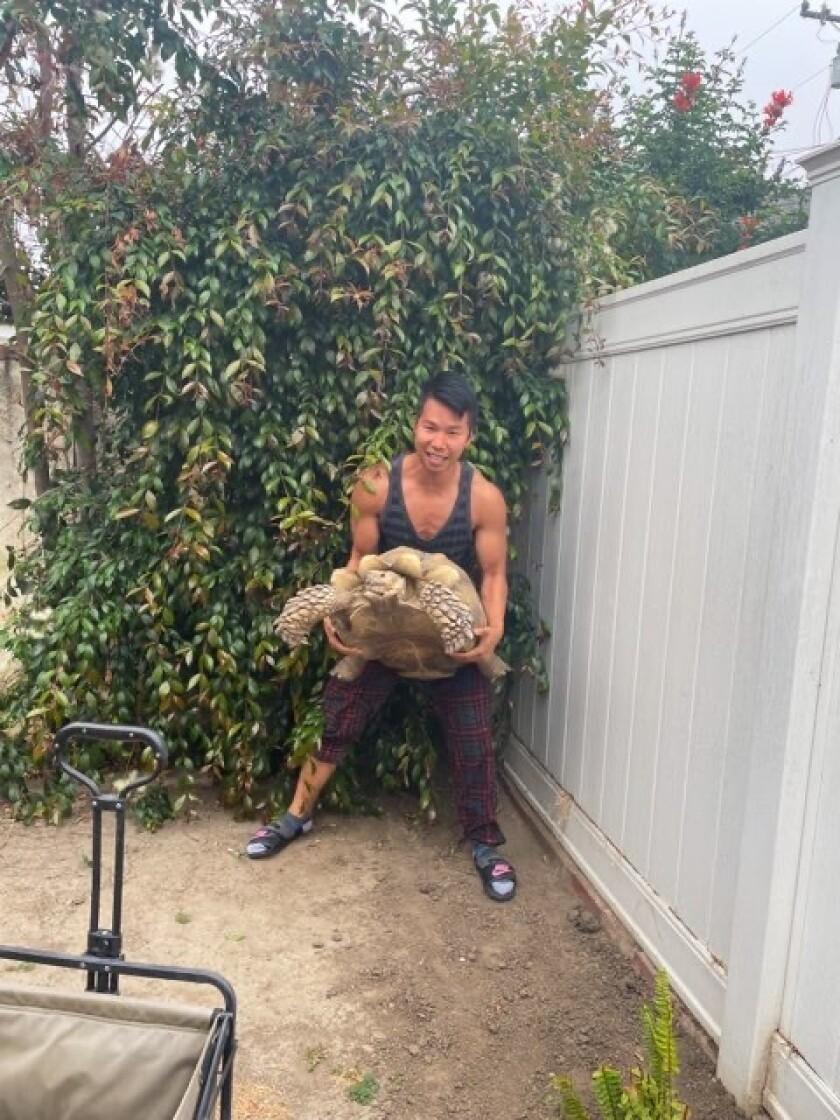 A man lifts a giant tortoise.