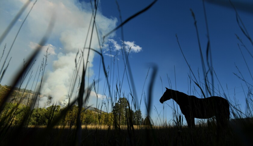 Smoke rises from a wildfire in Beulah, Colo., early this month.