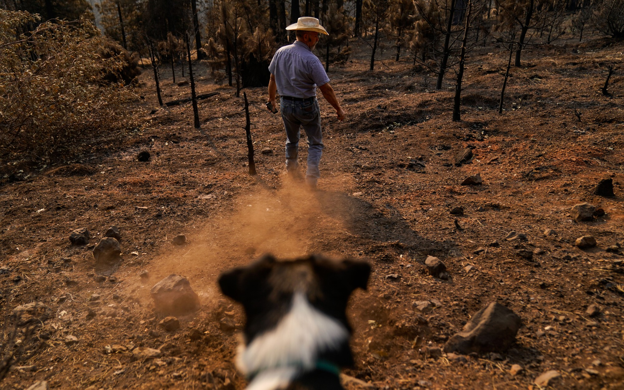 Dave Daley and his dog Newt prepare to search for his cattle that were lost in the North Complex fire.
