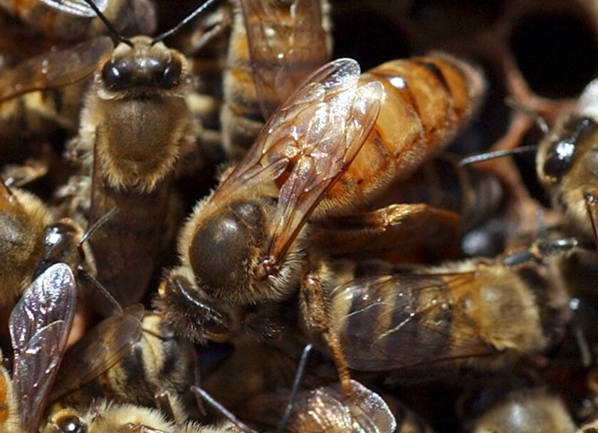 A hive heist: Nearly 100 beehives stolen in Northern California