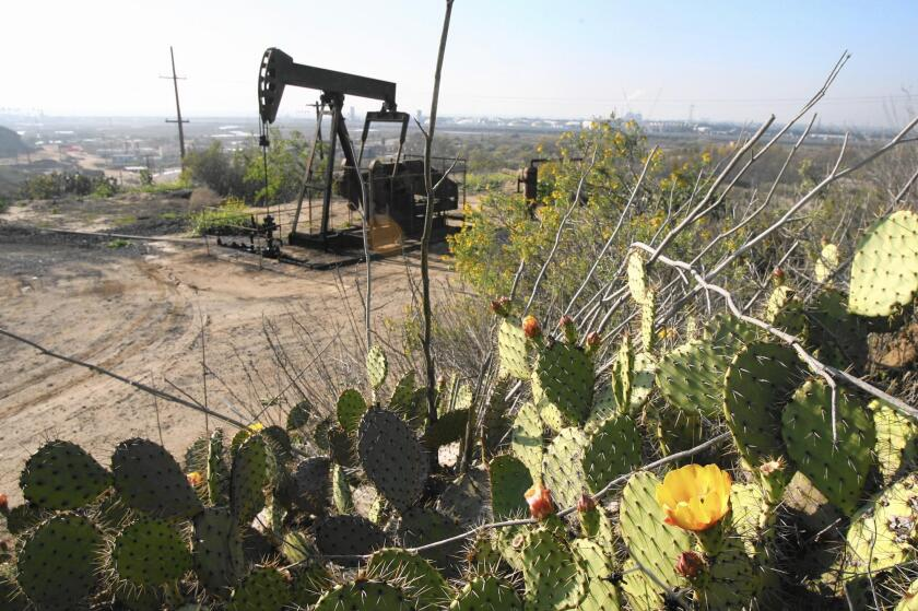 An oil pump operates beside blooming cactus plants at Banning Ranch. Oil operations have long occupied parts of the 401-acre coastal land.