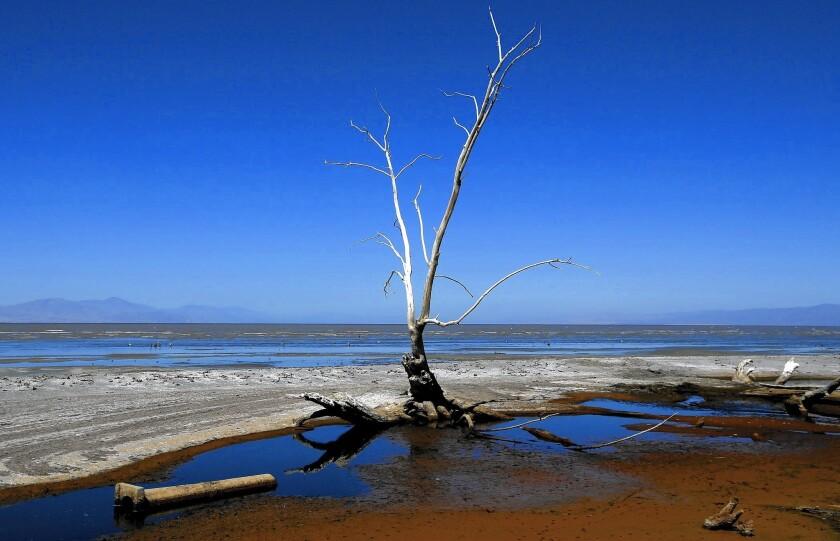 Dead trees, debris and dead fish dot the shoreline of the Salton Sea.