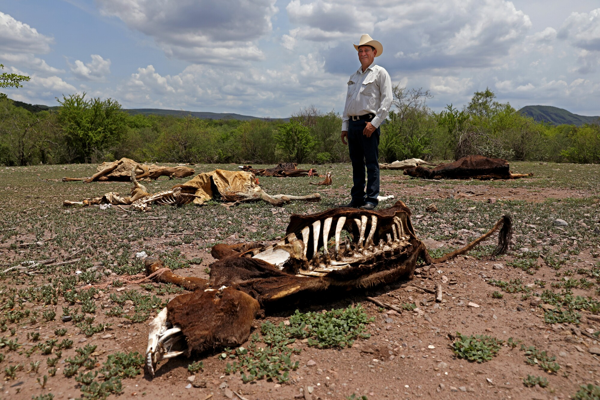 A rancher stands amid a field of cattle carcasses