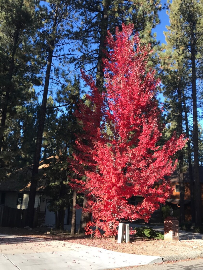 Fall colors Big Bear lake in 2019