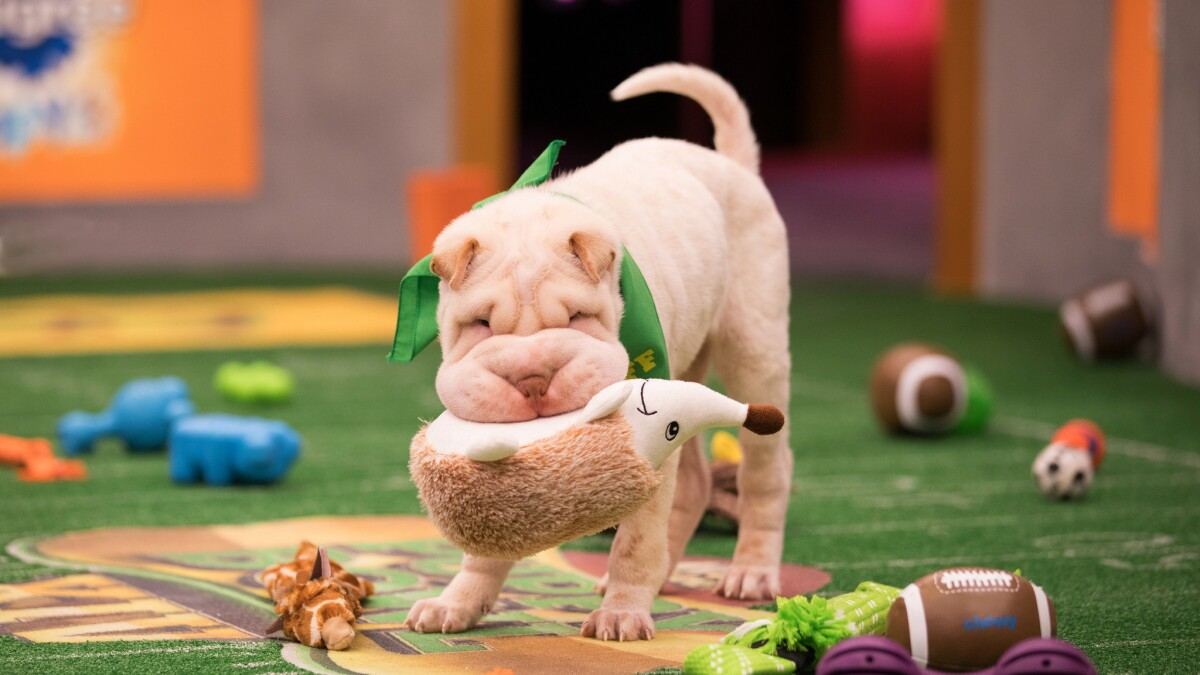Behind the scenes at 'Puppy Bowl,' TV's most adorable sporting event
