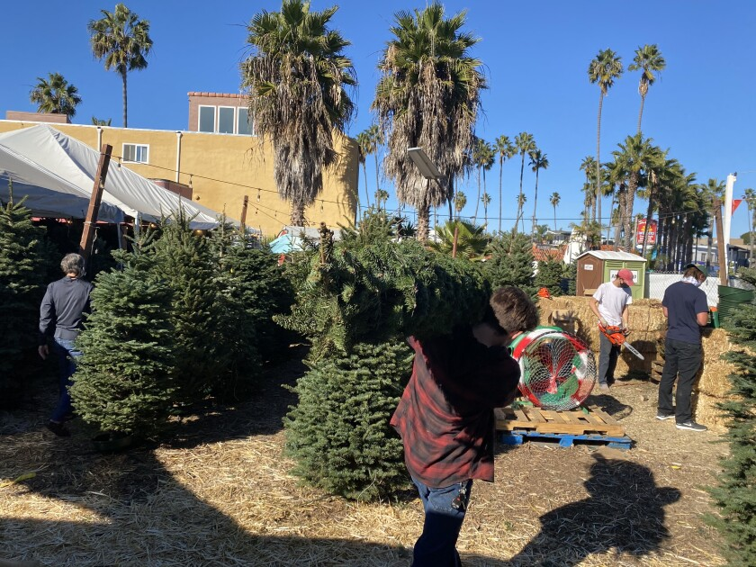 Employees and customers walk among the Christmas trees offered at the Mr. Jingle's lot on La Jolla Boulevard through Dec. 24.