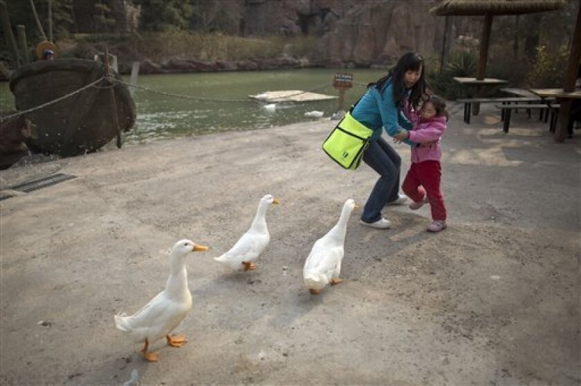 A woman and her daughter are frightened while ducks approach closely for food at an amusement park in Beijing, China, Wednesday, April 3, 2013. Scientists taking a first look at the genetics of the bird flu strain that recently killed two men in China said Wednesday the virus could be harder to track than its better-known cousin H5N1 because it might be able to spread silently among poultry without notice. The bird virus also seems to have adapted to be able to be able to sicken mammals like pig