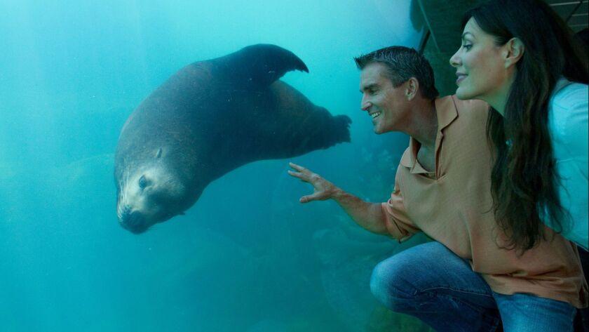 Romance at Aquarium of the Pacific. Credit: Aquarium of the Pacific