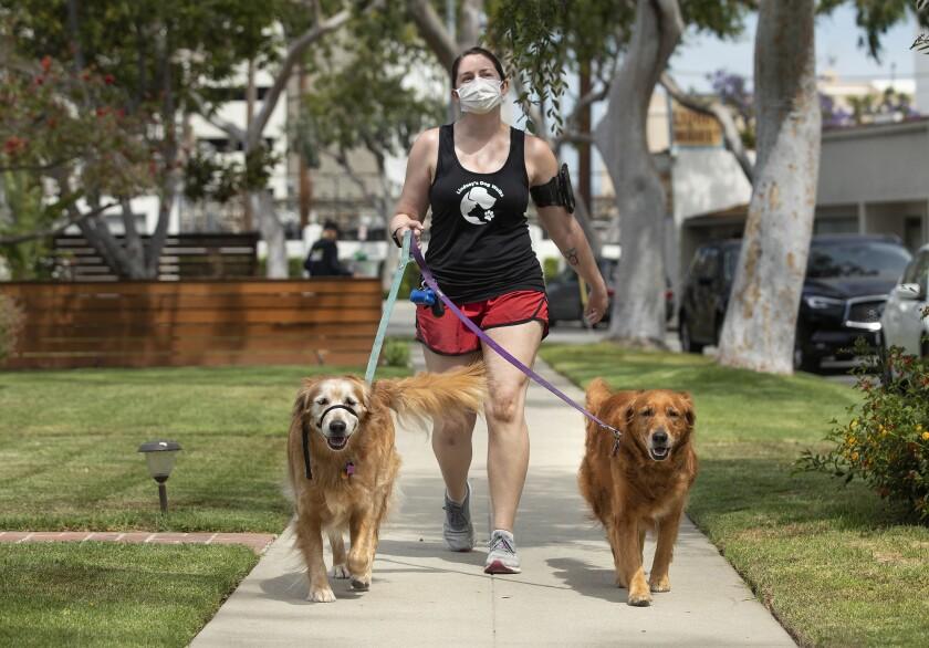 Lindsay Rojas, 28, owner of Lindsay's Dog Walks, walks two golden retrievers on Keystone Avenue in Culver City.