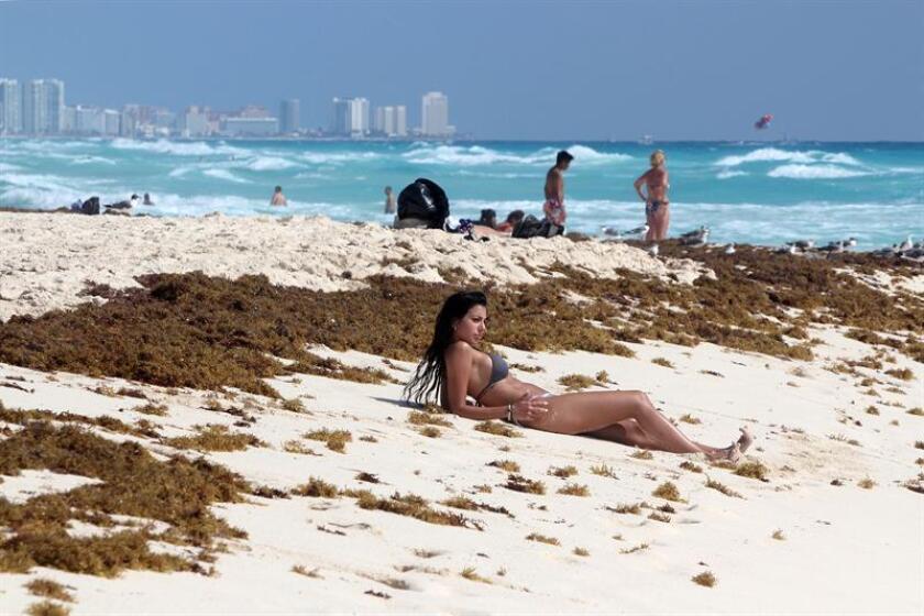 Vista general del sargazo que comienza a arribar este sábado a las playas del centro de Cancún (México) una problemática que ya vivieron estas costas el año pasado, según alertaron investigadores mexicanos. EFE