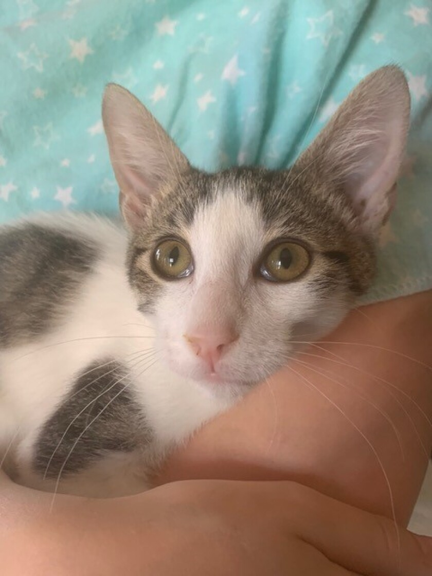 Dobby is gentle, calm and playful.