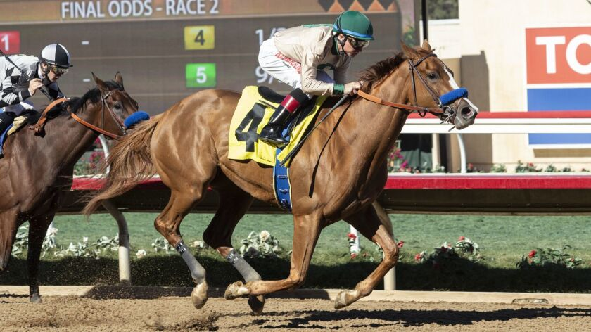 Chasing Yesterday and jockey Drayden Van Dyke win the $100,000 Desi Arnaz Stakes on Nov. 12 at Del Mar Thoroughbred Club. Chasing Yesterday is expected to run in the Starlet Stakes at Los Alamitos.