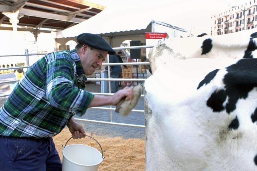 Aparcan destitución administrador reglamentadora industria lechera de P.Rico