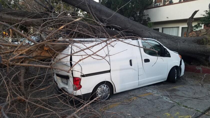 A van damaged by a fallen tree in the Valley Glen neighborhood.