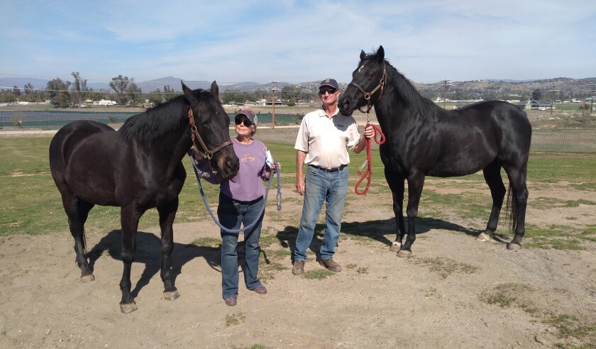 Maggi and Sherrel Heath show off their retired thoroughbreds, 25-year-old Twinkling Lights, left, and her daughter Cat, 19.