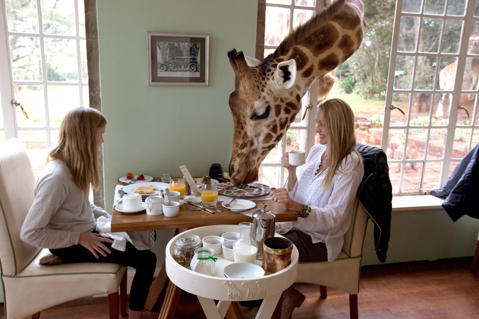 By Photo Congress || Giraffe Sound Crossword