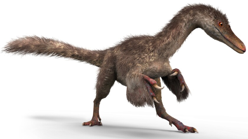 A reconstruction of the sparrow-sized coelurosaur.