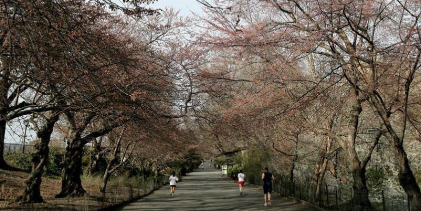 Fotografía de archivo del 10 de abril de 2008 que muestra a personas trotando en una calle del Central Park, en Nueva York, Nueva York (EE.UU.). EFE/ARCHIVO