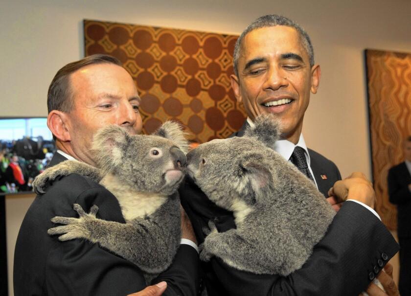 Australia's Prime Minister Tony Abbott and President Obama hold koalas before the start of the first G-20 meeting in Brisbane.