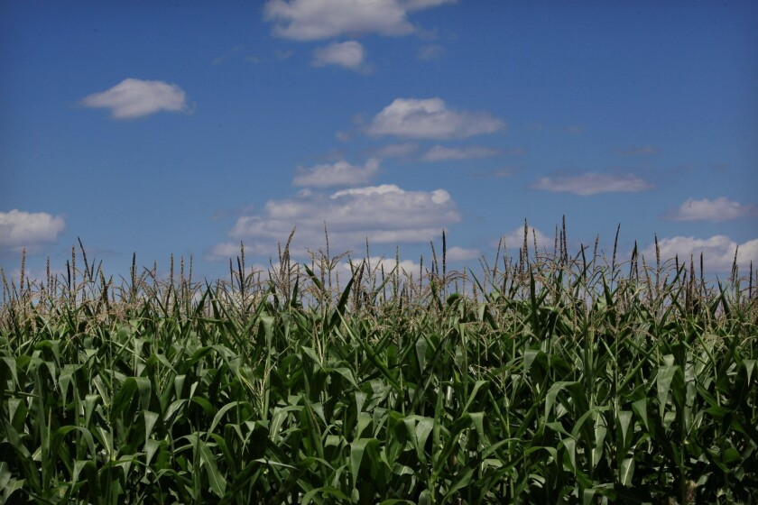 Cornfields just south of Belle Plaine, Minn. China would buy more U.S. corn under a proposed agreement to purchase nearly $70 billion in American goods to stave off tariffs.