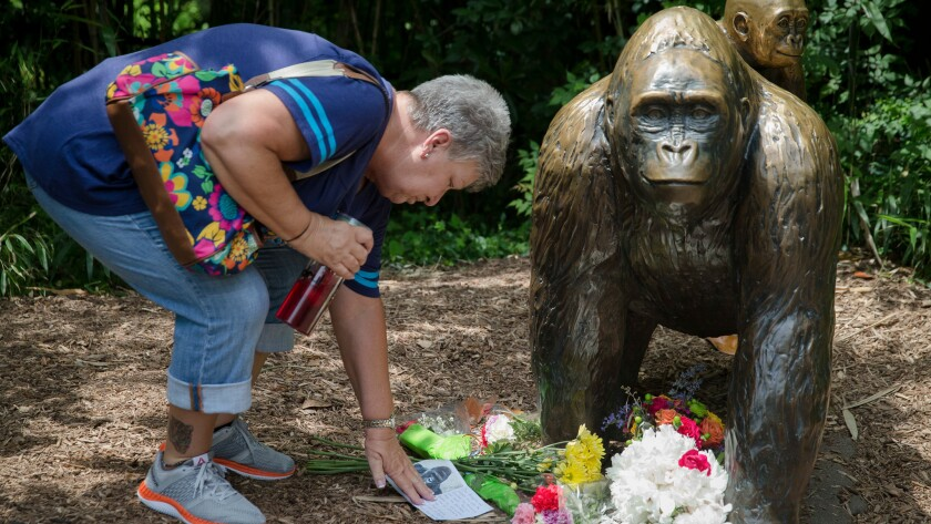 Eula Ray touches a sympathy card beside a gorilla statue outside the Gorilla World exhibit at the Cincinnati Zoo & Botanical Garden on May 29.