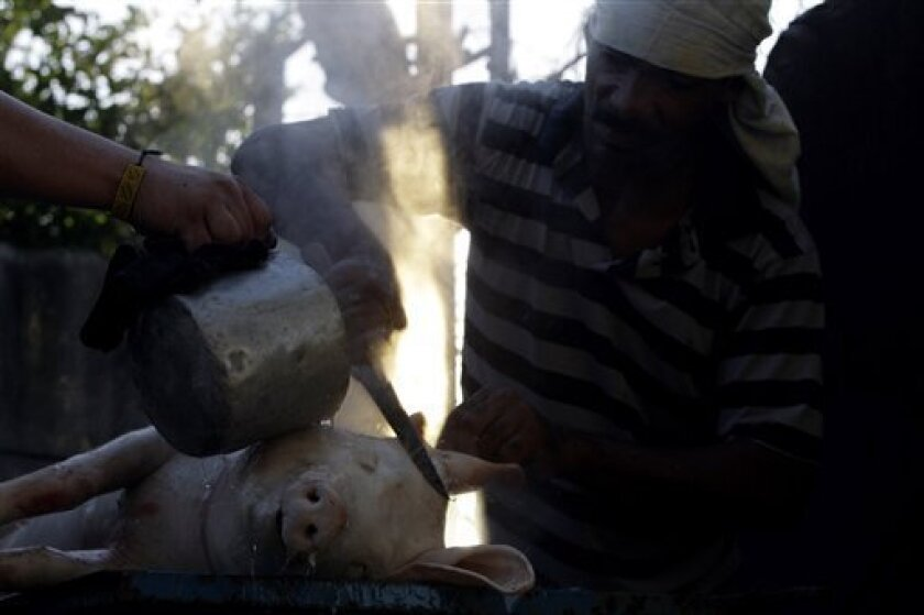Yosvany Sanchez prepares a pig to be roasted as main dish for a New Year's Eve celebration in Havana, Thursday, Dec. 31, 2009. (AP Photo/Franklin Reyes)