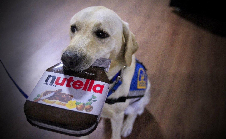 Nutella, Ian's Wingman