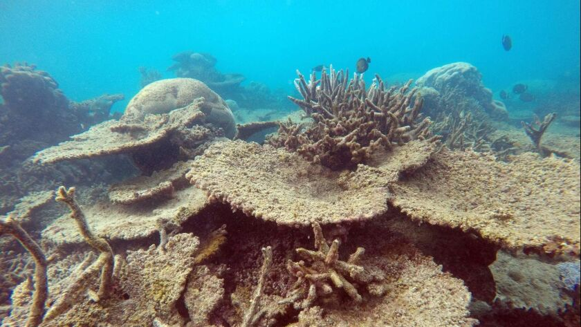 AUSTRALIA-ENVIRONMENT-REEF-CLIMATE