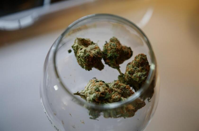 El Gobierno de Colorado dio hoy a conocer las nuevas reglas que regirán en 2018 para la producción y venta de marihuana con fines recreativos en el estado, que por su experiencia de cuatro años en este campo puede servir de ejemplo para otros como Ohio y Michigan, con los que ya colabora. EFE/ARCHIVO