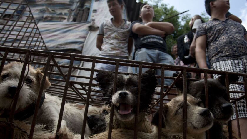 Vendors wait for customers to buy dogs in cages at a market in Yulin, in southern China's Guangxi province on June 21, 2015. The city holds an annual festival devoted to the animal's meat, which has provoked an increasing backlash from animal rights activists.