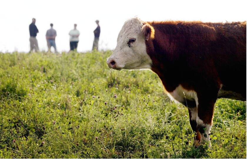 Demand for grass-fed beef is growing