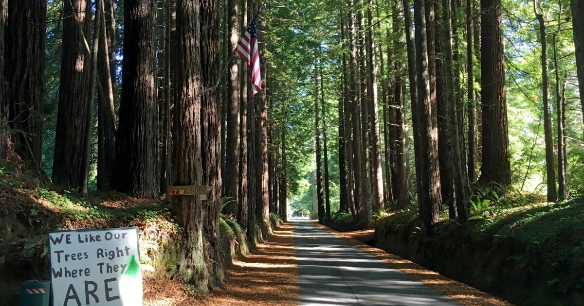 In Northern California Protokollierung Land, die Bewohner Klammer für einen Kampf über Ihre 'magischen' redwood gesäumten Straße