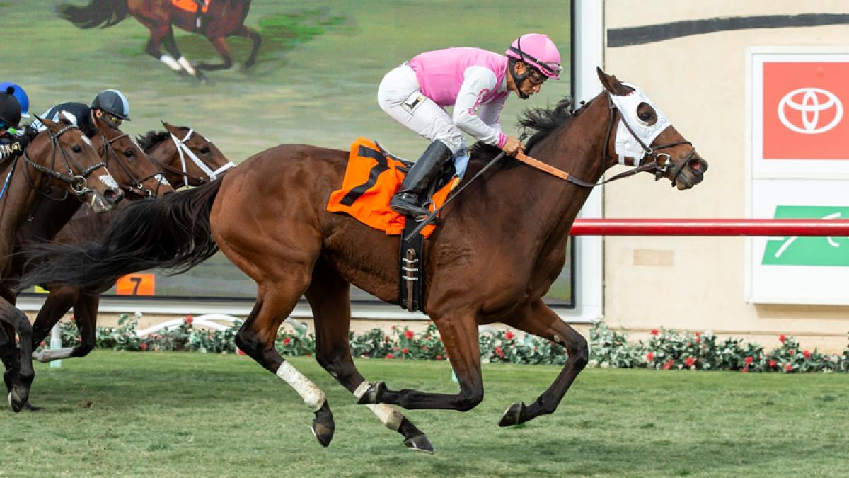 Horse racing betting analyst jobs onlinebetting in uganda