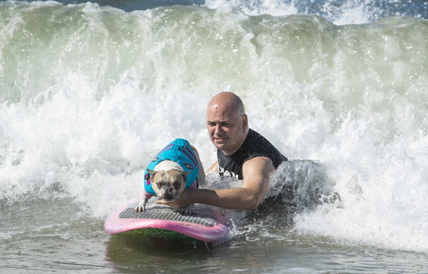 Dan Nykolayko starts his French bulldog Cherie on a wave in Huntington Beach last weekend. Cherie won the World Dog Surfing Championships earlier this month in Pacifica.