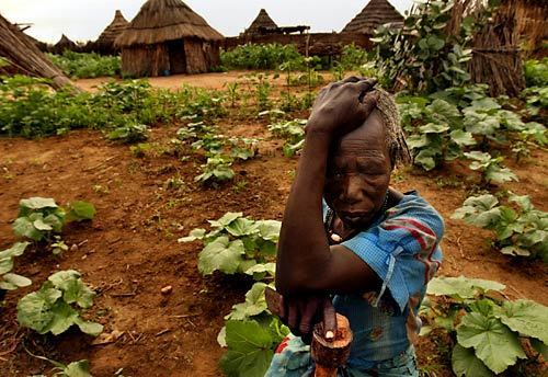 Darfur village springs back to life