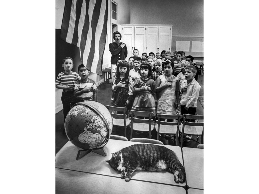 """Sep. 14, 1964: """"Room 8"""" the cat, pet of Elysian Heights elementary school in classroom on first day"""