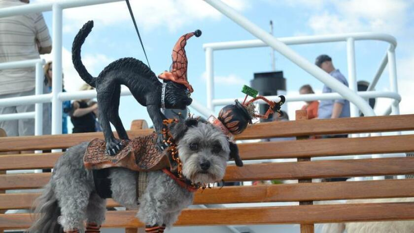 The seventh annual Bow Wow Brunch Cruise sets sail on Sunday. (Courtesy photo)