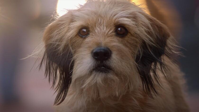"""Benji the dog in the movie """"Benji."""""""