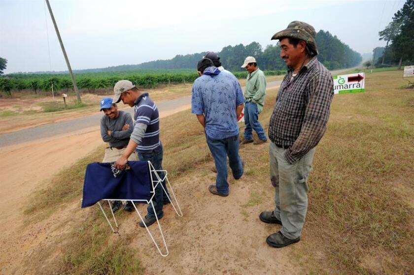 Fotografía de unos trabajadores agrícolas migrantes. EFE/Archivo